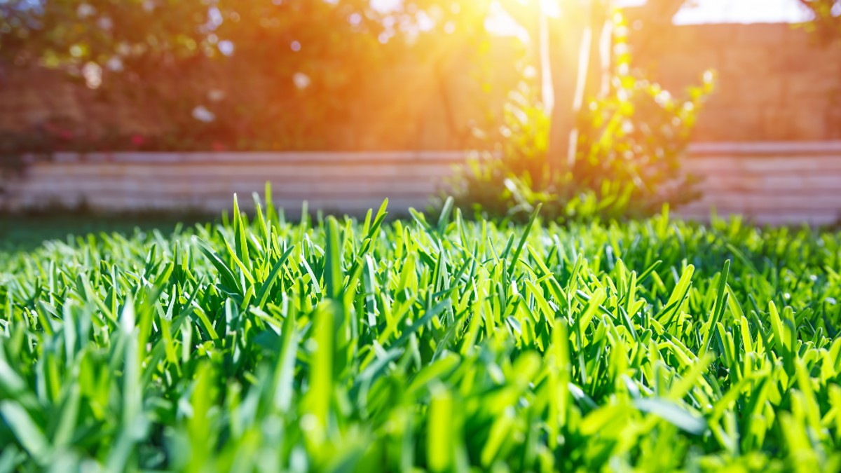 Simple techniques to restore your lawn after winter